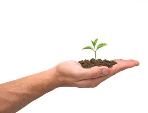 Plantbiostimulante, die nuwe tendens in gewasverbetering